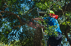 Tree Service | Affordable Tree Service