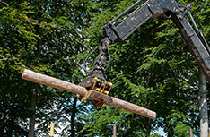 Tree Removal | Affordable Tree Service