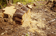 Stump Removal | Affordable Tree Service